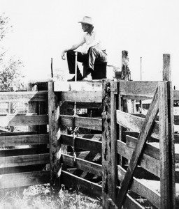 JayB Sr on cattle gates (1)