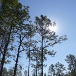 pines-at-heartwood-preserve_26767921259_o